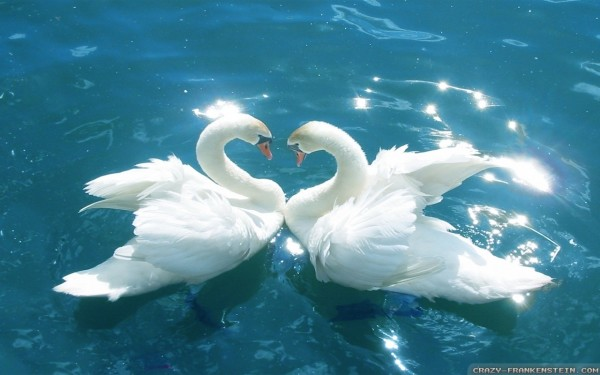 Love-Birds-Wallpaper-1280x800 1