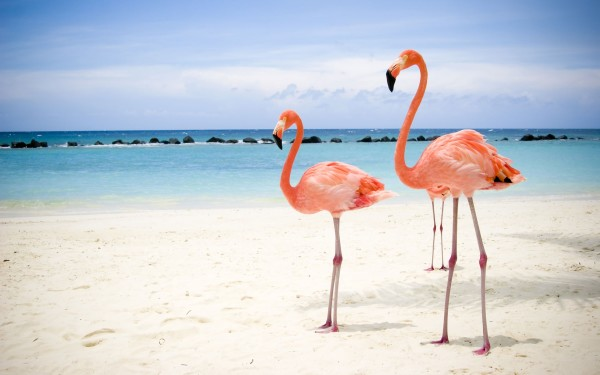 birds-wallpapers1920x1200-flamingo-birds-desktop-wallpapers-and-stock-photos-xutsuvzr0