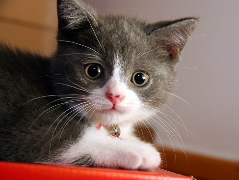 30 Latest Lovely Cute Cats Pictures Hd Images